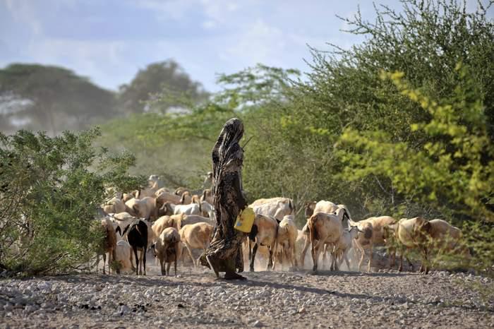 The Sámi People: Pastoralism vs. Agriculture
